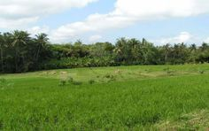 """Invest in Land in Bali- a fantastic opportunity to build your own Villa in Paradise. """"Well, real estate is always good, as far as I'm concerned."""" – Donald Trump"""