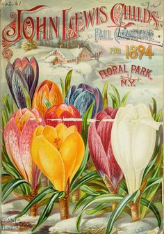 John Lewis Childs Seed Company Catalogue - rare flowers, vegetables & fruits - 1894