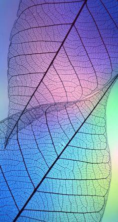 Galaxy Wallpaper, Colorful Wallpaper, Cellphone Wallpaper, Flower Wallpaper, Nature Wallpaper, Screen Wallpaper, Cool Wallpaper, Wallpaper Backgrounds, Iphone Wallpaper