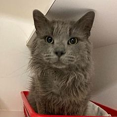 Shaggy, Delaware, Pet Adoption, The Fosters, Safari, Trainers, Dog Cat, Meet, Homes