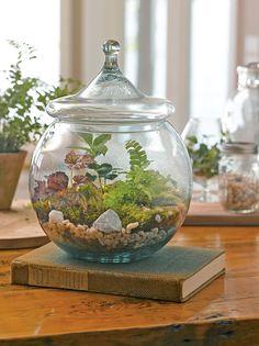 Terrarium Supplies: DIY Terrarium Kit   Gardener's Supply