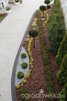 Ogród nie tylko bukszpanowy - część II - strona 1419 - Forum ogrodnicze - Ogrodowisko
