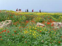 Dans les ruines de Paphos à Chypre