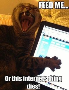 Lolcats - Lolcats n' Funny Cat Pictures - funny cat pictures