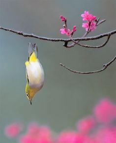 dive  #bird