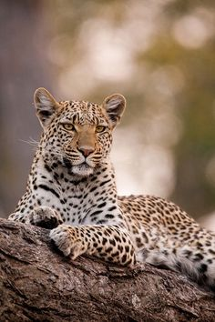 The Animals, Wild Animals Pictures, Nature Animals, Animal Pictures, Wild Life Animals, Safari Animals, Wild Animals Photography, Wild Photography, Wildlife Photography