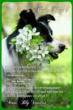 Positive Thoughts, Positive Quotes, Lekker Dag, Evening Greetings, Afrikaanse Quotes, Goeie Nag, Goeie More, Uplifting Words, Special Quotes