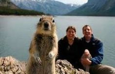 Meet Mr. Squirrel Photobomber!!