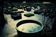 Un sencillo sistema de tanques permite  la captación de agua de lluvia. Urban Farming, Landscaping, Survival, River, Outdoor, Gardens, Harvest, Tanks, Simple