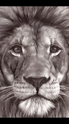 Lion Images, Lion Pictures, Majestic Animals, Animals Beautiful, Lion Tattoo Sleeves, Lion Photography, Lion Head Tattoos, Lion Painting, Lion Wallpaper