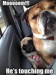 Funny pictures about That's How Pugs Get Wrinkled. Oh, and cool pics about That's How Pugs Get Wrinkled. Also, That's How Pugs Get Wrinkled photos. Animal Captions, Funny Animal Memes, Funny Animal Pictures, Funny Dogs, Funny Animals, Cute Animals, Funny Memes, Meme Pictures, Funny Photos