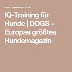 IQ-Training für Hunde   DOGS – Europas größtes Hundemagazin