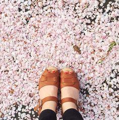 Tan peep toe clogs photo by @athomeinlove