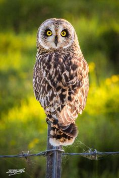 5485.Brown owl with orange eyes has left eye closed.POSTER.decor Home Office art