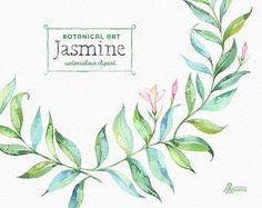 Jasmine. Botanical art. Floral Elements wreath door OctopusArtis