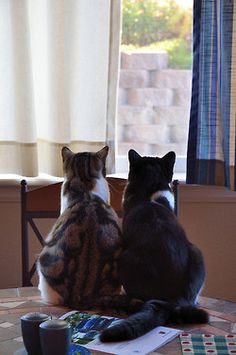 """""""Passion for place--there is no greater urge in feline nature."""" --Paul Annixter"""
