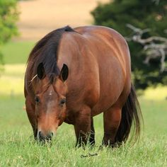 American Quarter Horse, Quarter Horses, Bays, Appaloosa, Beautiful Horses, Line Art, Westerns, Art Ideas, Painting