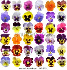 pressed pansy watercolor - Google Search