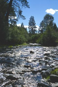 Whychus Creek at Camp Polk Meadow Preserve - near Sisters, Oregon