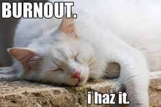 That's why I need lots of cat naps! ;)
