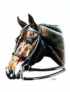 Robbie - 17.3 Hand Thoroughbred Horse in Dressage Double Bridle Color pencil Portrait by Clare Hobson