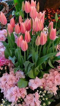 pink tulips and azaleas