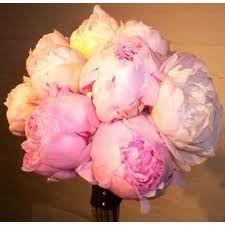 Huge peony bouquet