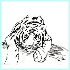 How was your day? Is it time for you to lay low? Well for me it is was a quite full day with very different things. So enjoy your evening!  For Sale : Tiger Sketch Nr: S2016-042  Size: 42 x 59.7 cm   16.5 x 23.5 inch  Material: carcoal drawing on paper  Shipping: worldwide  Price:  90- If you are interested in purchasing this sketch  please send an e-mail to nimue@tigressart.com