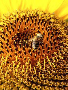 """""""Shine like gold, buzz like a bee..."""""""