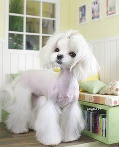 30 Dog Grooming Styles 10