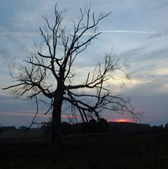 Julia pitched her white, fluffy wedding dress up into this dead tree on a deserted street in North Dakota. He had loved the dress because it covered her up. She hated it. She felt suffocated in it. He didn't care.
