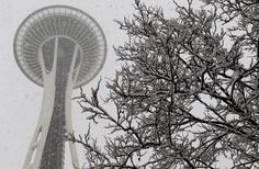 Snow accumulates on the branches of trees below the Space Needle in Seattle  //  REUTERS/Anthony Bolante