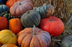 love the heirloom pumpkins for fall decor