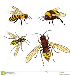 Bee, Wasp, Bumblebee, Hornet - Vector Illustration Stock Vector - Illustration of pollinator, colouring: 108800601