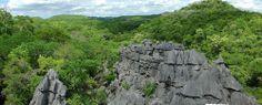 Green & Grey : Tsingy d'Ankarana - Madagascar