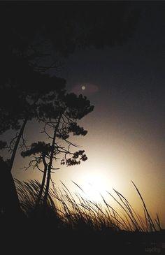 un-gif-dans-ta-gueule:Sunset