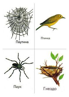 Preschool Learning Activities, Teaching Kindergarten, Learn Russian, Montessori Materials, Insects, Birds, Projects, Montessori Activities, Language