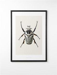 Kridhvid bille  Chalky white beetle     Mål: Mål: 42*59 cm - DKK 250,00 Mål: 70*100 cm - DKK 350,00