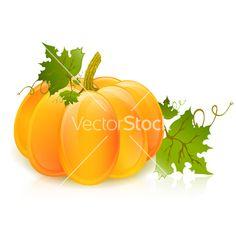 Pumpkin vector image on VectorStock Pumpkin Vine, Biggest Pumpkin, Pumpkin Vector, Green Leaves, Porches, Adobe Illustrator, Holiday Ideas, Vines, Vector Free