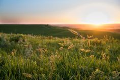 Whispers on the Prairie; Konza Prairie, KS; Picture Perfect Prairie: LIKE, COMMENT, or SHARE TO VOTE!