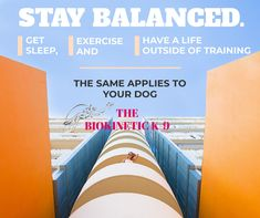 Balanced Fitness programs are easy with the right coach! Contact me to help you design your balanced fitness program. Fitness Programs, Workout Programs, Athletes, Your Design, Your Dog, The Outsiders, How To Apply, Exercise, Train