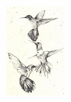 Image result for Silouhette Tiny Hummingbird Tattoo