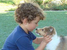 first Sheltie Kiss Mini Shetland, Mini Collie, Blue Merle, Shetland Sheepdog, Sheltie, Great Memories, Best Dogs, Corgi, Pets