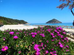 Paradise Beach - secluded beach with fine and shallow water - Thassos Island