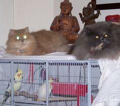 Kitty and Yoyo