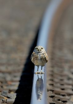 Waiting For My Train ~~~ MarcusArmani   ..rh