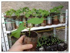 Étagères de cultures. Legume Bio, Planting Vegetables, Agriculture, Canning, Place, Garden, Crafts, Packaging, Planting Seeds