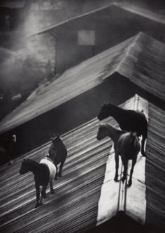 W. Eugene Smith  Untitled, 1954