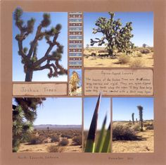 Desert (Joshua Tree) layout