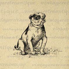 Digital Printable Bulldog Graphic Dog Image Download Vintage Clip Art for Transfers Printing etc HQ 300dpi No.263